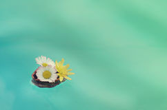 Flowers in walnut shell floats on the water Royalty Free Stock Image