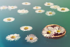 Flowers in walnut shell floats on the water like small boat Royalty Free Stock Image