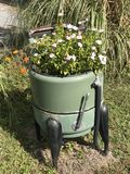 Flowers in Washer. Antique green planter wash tub with Stock Image