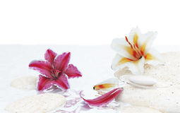 Flowers and water Royalty Free Stock Photography