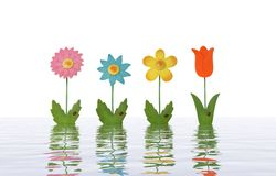 Flowers in Water. Four colorful toy flowers isolated over white Stock Photography