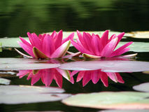 Flowers on water Royalty Free Stock Photography