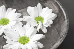 Flowers in water Stock Photography