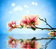 Flowers, water. Branch with flowers above the water stock photo