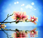 Flowers, water. Branch with flowers above the water stock images