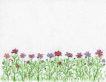 Flowers water color Stock Photos