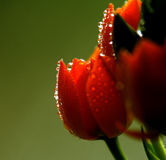 Flowers with water drops. Under light Stock Photo