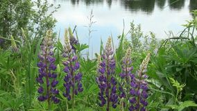 Flowers by the water stock footage