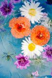 Poppy's Daisies and wild geranium. royalty free stock image