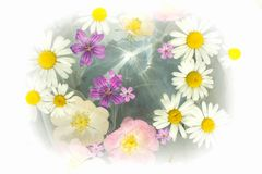 Flowers in water. stock images