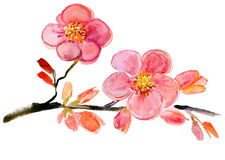 Flowers, watercolor illustration Royalty Free Stock Photography