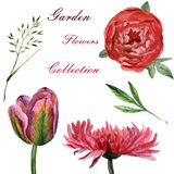 Flowers watercolor illustration. Set of garden flowers on a white background stock illustration