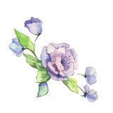 The  flowers watercolor  painting watercolor  Royalty Free Stock Photography