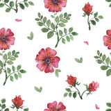 Flowers watercolor pattern Stock Photography