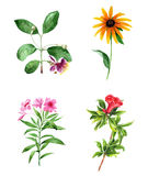 Flowers watercolor set Stock Images