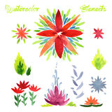 Flowers watercolor vector elements Stock Photography
