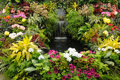 Flowers and waterfall Royalty Free Stock Photos