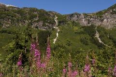 Flowers and Waterfalls Running Down Mountain Range Royalty Free Stock Photos