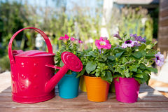 Flowers and watering can Stock Images