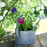 Flowers in a watering can Stock Photo