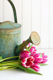 Flowers with watering can Royalty Free Stock Images
