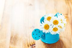 Flowers in watering can Royalty Free Stock Photography