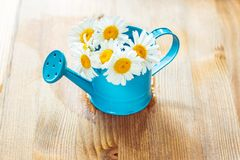 Flowers in watering can Stock Image