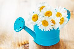Flowers in watering can Stock Photos