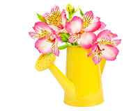 Flowers in a watering can stock images