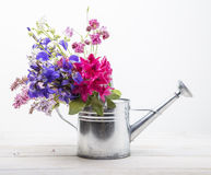 Flowers in watering can Royalty Free Stock Photo