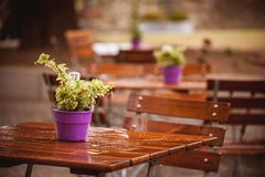 Flowers on a wet cafe table after rain Stock Photography