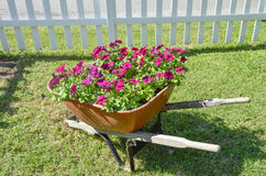 Flowers in a wheel barrow. Bunch of red flowers in an old wheel barrow with a fence in the background Stock Photo