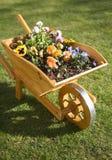 Flowers in wheelbarrow. Close up of blooming flowers in wooden wheelbarrow stock image