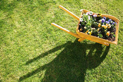 Flowers in wheelbarrow. Looking down on wooden wheelbarrow containing colorful flowers, green grass background royalty free stock photos