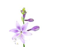 Flowers on white Royalty Free Stock Photo