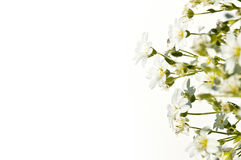 flowers on a white background Stock Photos
