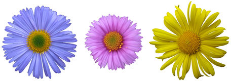 Flowers on a white background.  Stock Photography