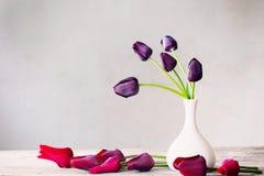 Flowers on white background Stock Image