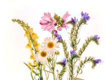Flowers on white background. Flowers photographed on a light box stock images