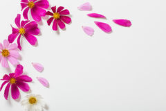 Flowers on white background Stock Image