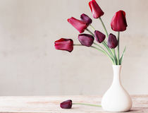Flowers on white background Stock Images