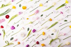 Flowers on a white background. royalty free stock photos