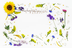 Flowers on white background. Top view, flat lay Royalty Free Stock Images