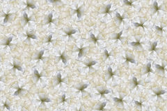 Flowers white background . Yellow-white large petals flowers tulip. floral collage. Flower composition. Nature Stock Photo