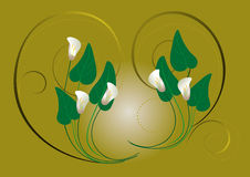 Flowers white callas on a green background Stock Photo