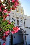 Flowers and a white church. Pink flowers and the summer sun hiding behind them and a beautiful greek orthodox church Stock Photos