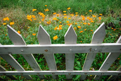 Flowers and white fence. Orange flowers blooming in field or garden with white picket fence in foreground Stock Photography