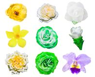 Flowers in white isolated set bright and colorful stock images
