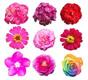 Flowers in white isolated set bright and colorful royalty free stock photos