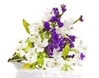 Flowers white lily Stock Photo